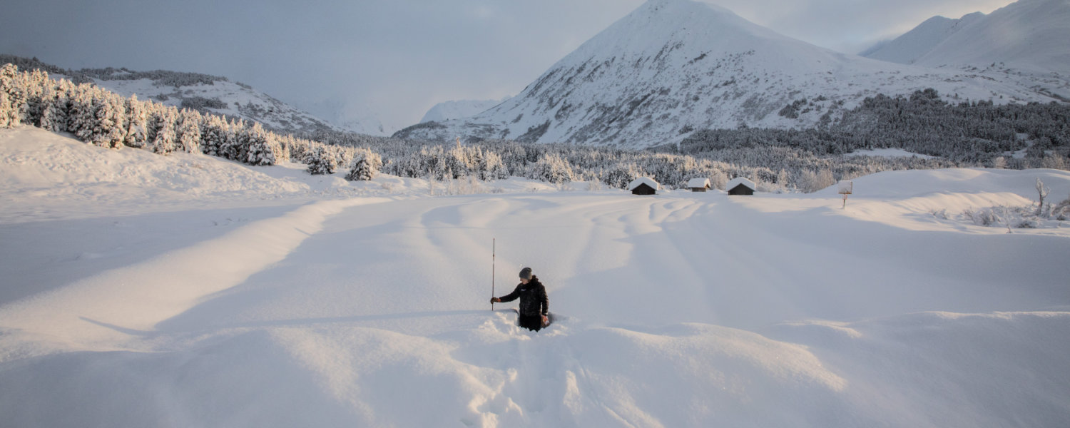 Chugach National Forest Avalanche Information Center Forecaster measuring recent snowfall after large storm